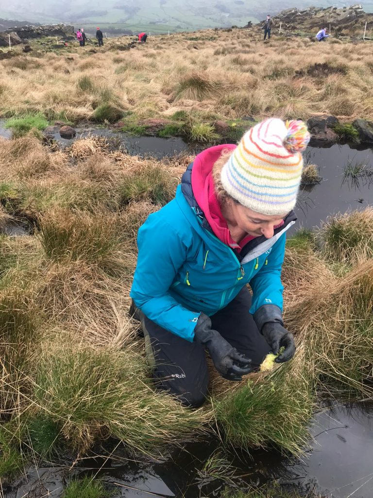 Climate action - Sphagnum planting on Roaches peat bogs
