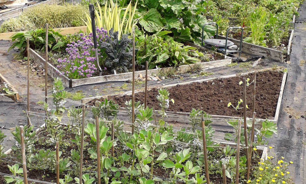 Grow your own - Tideswell allotments